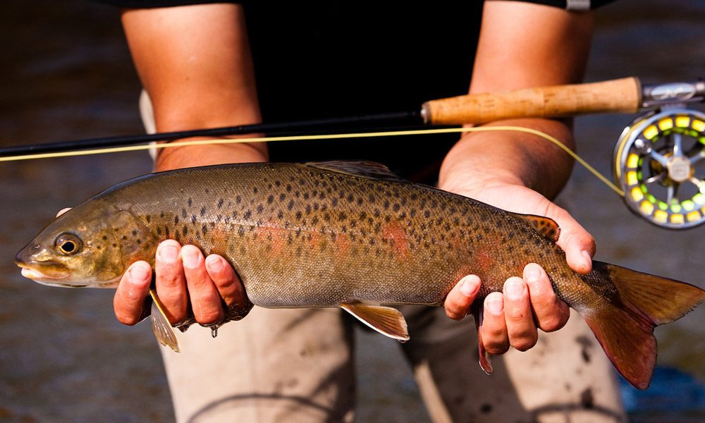 Fly Fishing for Trout in Mongolia